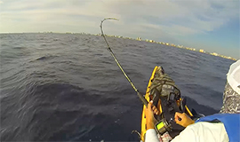 Dania Beach Sailfish Part 3