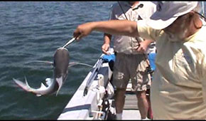 Sail Cat Fishing