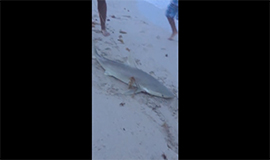 How To Catch A Shark From The Beach